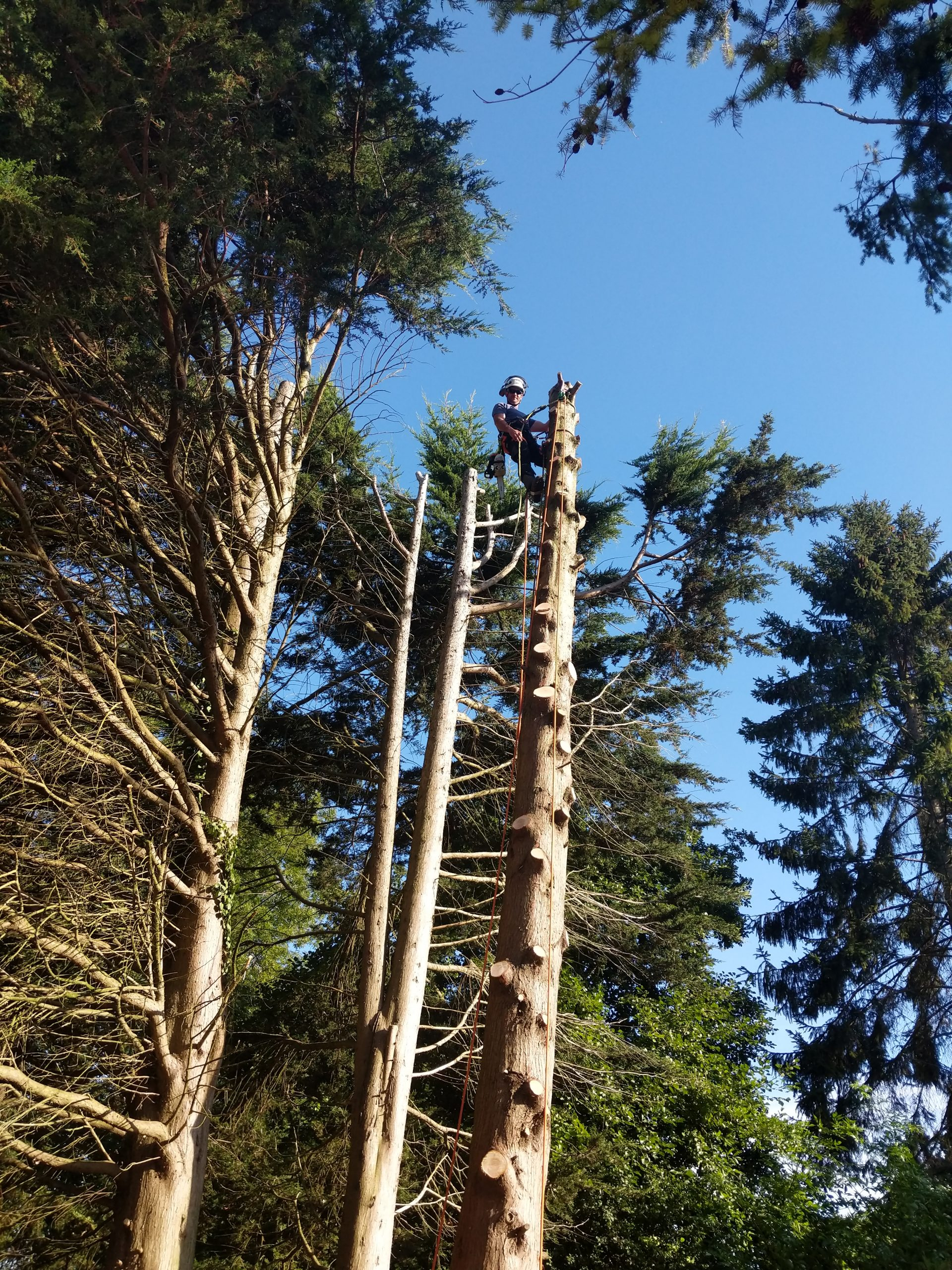 Tree Surgeon Great Dunmow
