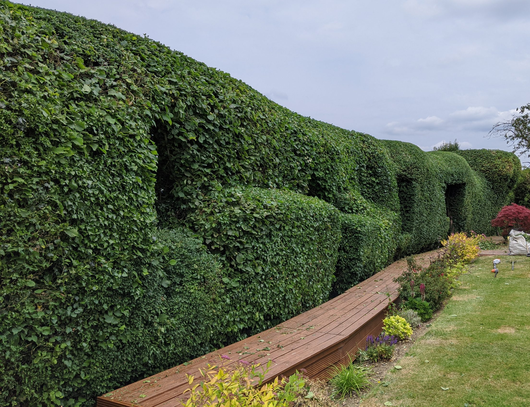Hedge Pruning and Shaping Great Dunmow