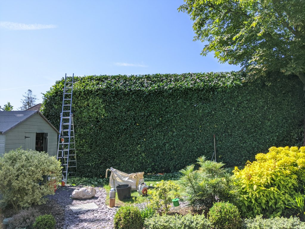 Hedge Trimming Great Dunmow